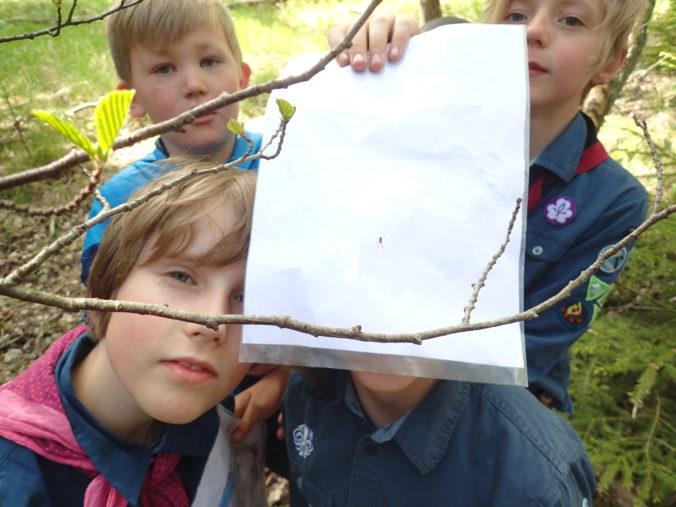 Vad man hittar i Skogen: Spindelnät