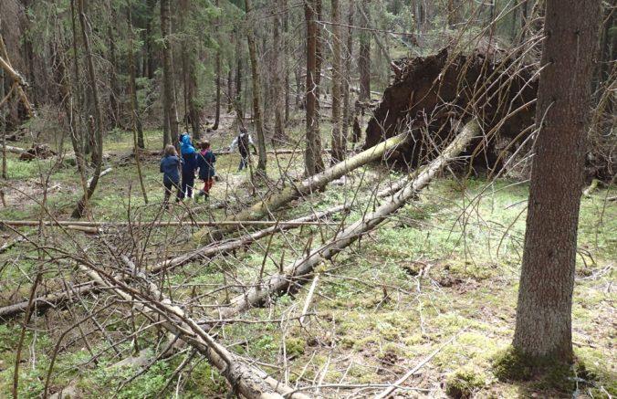 Vad man hittar i Skogen: Stormfälle