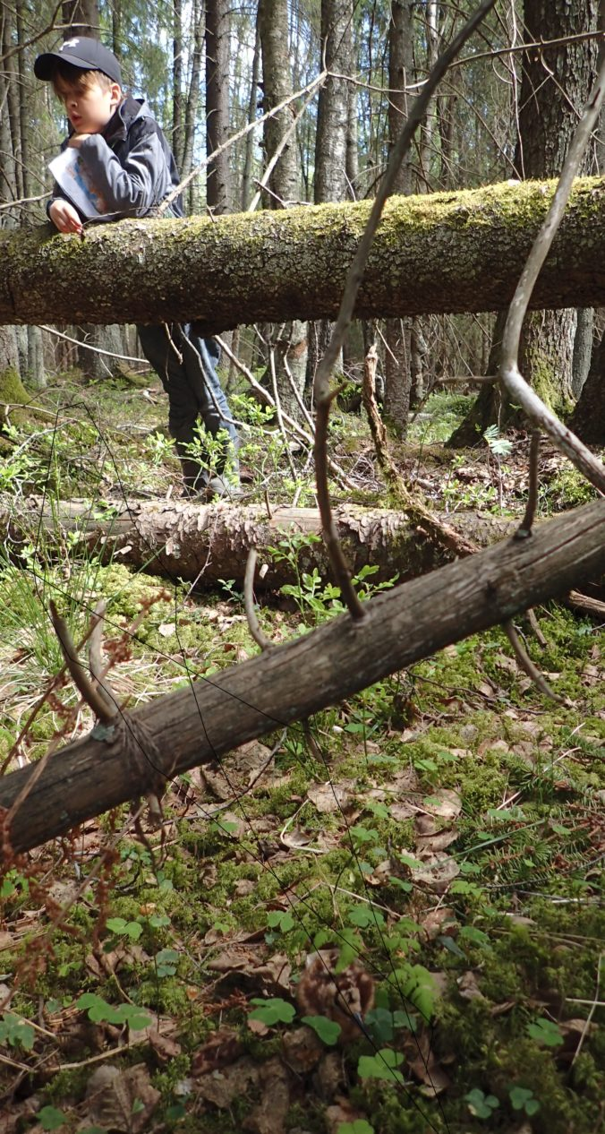 Vad man hittar i Skogen: Morkulla